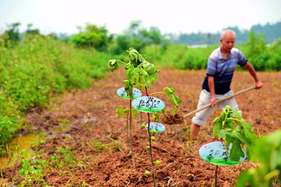 花山田园见证人间情谊 农旅认养让都市人回归自然