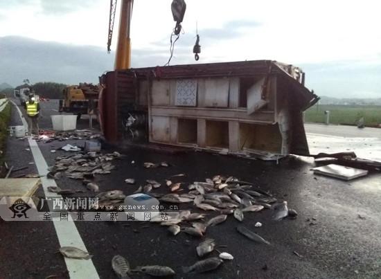 载鱼货车侧翻高速路 两人受伤鱼撒落一地(图)