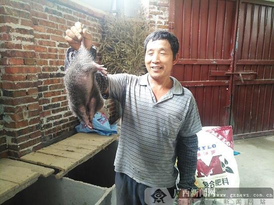 柳南区流山镇发展特色产业 竹鼠桑蚕养殖亮点多