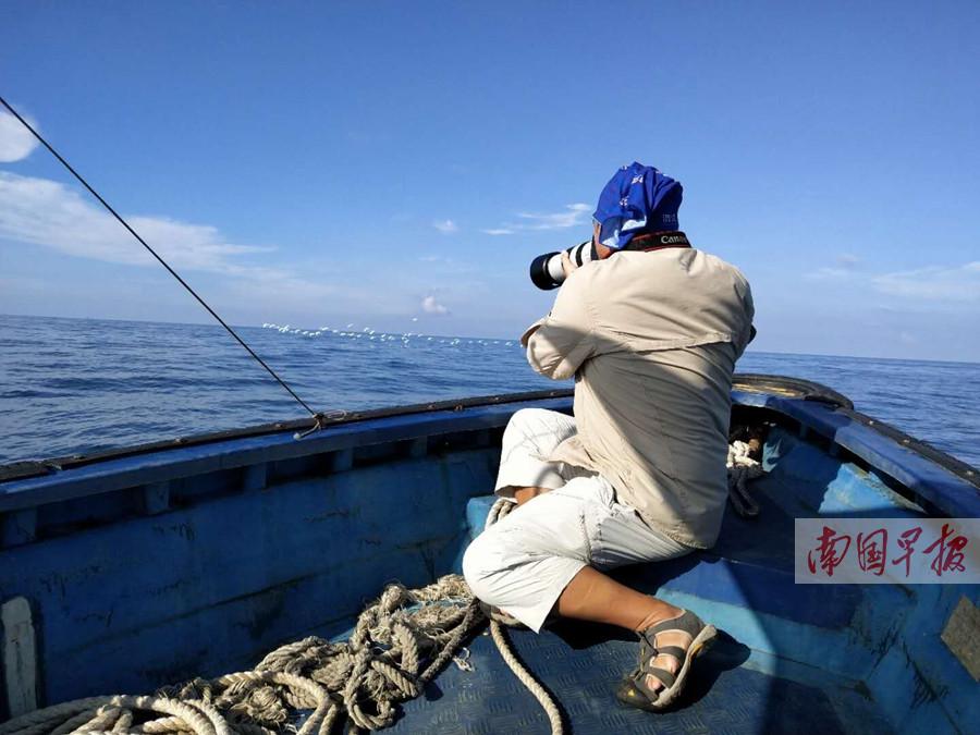 """北海涠洲岛海域""""鲸出没"""" 3头鲸捕食场景震撼(图)"""