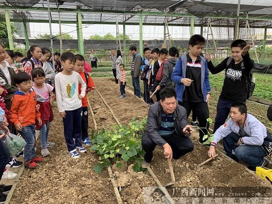 生態環保小衛士走進南寧市蔬菜研究所(圖)