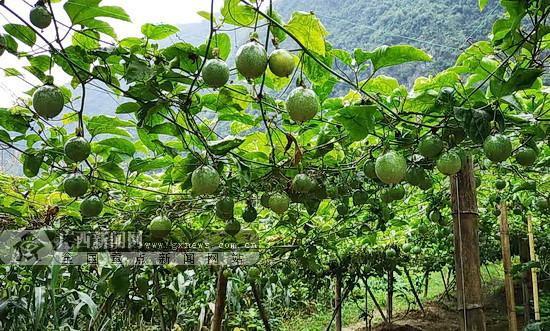 宜州古文村脱贫纪实:发展乡村旅游 造福一方百姓