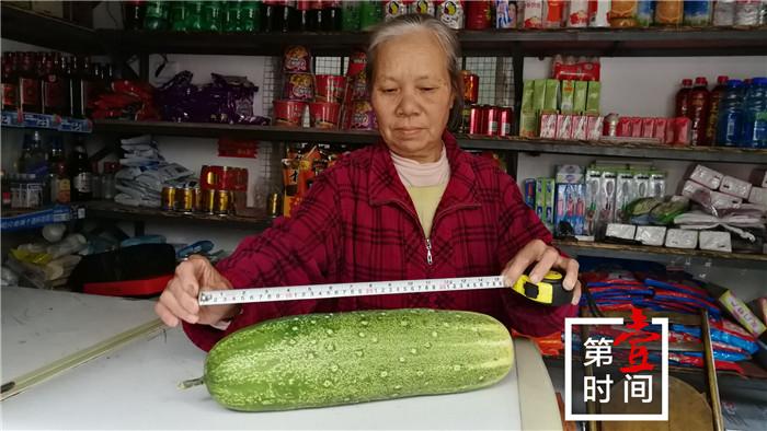 """桂林67岁李阿姨种出""""黄瓜王""""近5斤重""""腰围""""32.5厘米"""