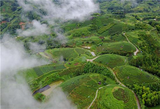 2018中国茶业科技年会将在三江举办(图)