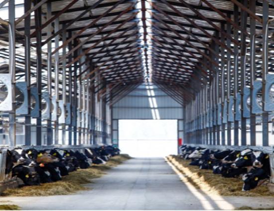 蒙牛用世界品质扛起中国乳业大旗