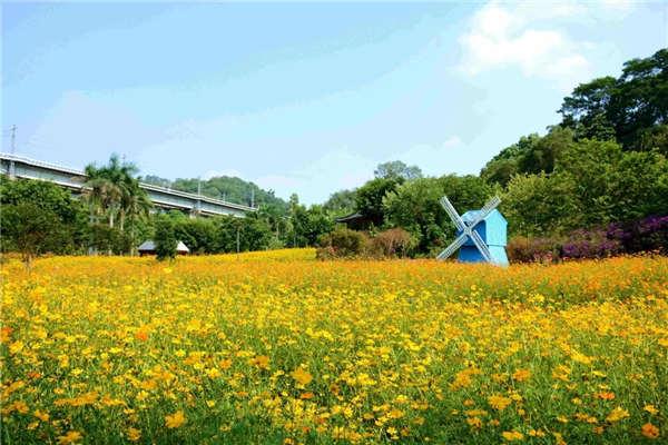 三山森林公园花海,点缀高铁沿线最美景致