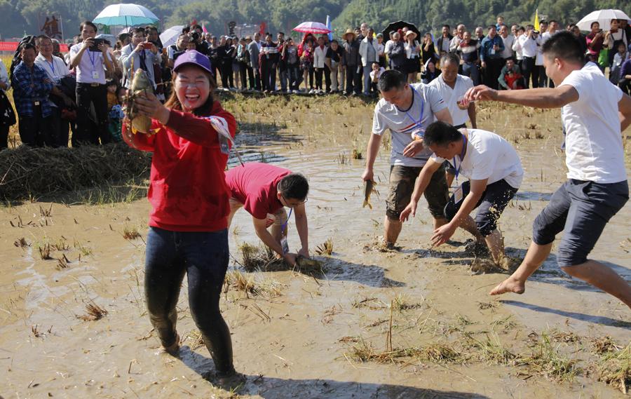 高清:贺州八步村民挑稻谷、徒手抓荷花鱼庆丰收