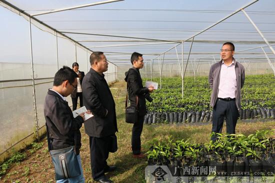 [来宾行]广西红河红:打造来宾现代农业示范核心区