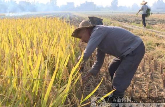 东兴古稀老人成种田达人 带领村民脱贫致富