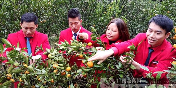 南丰蜜桔牵动桂林企业 多渠道助果农度危机