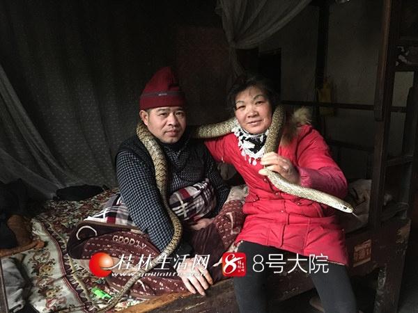"""残疾男子""""听书""""自学养蛇技术 家里养蛇500多条"""