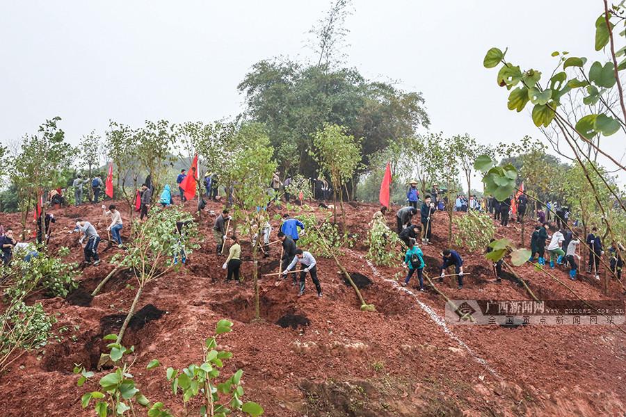 2019年自治区党政军义务植树活动在邕举行(组图)