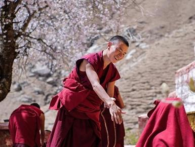 西藏拉萨帕邦喀周围桃花盛开
