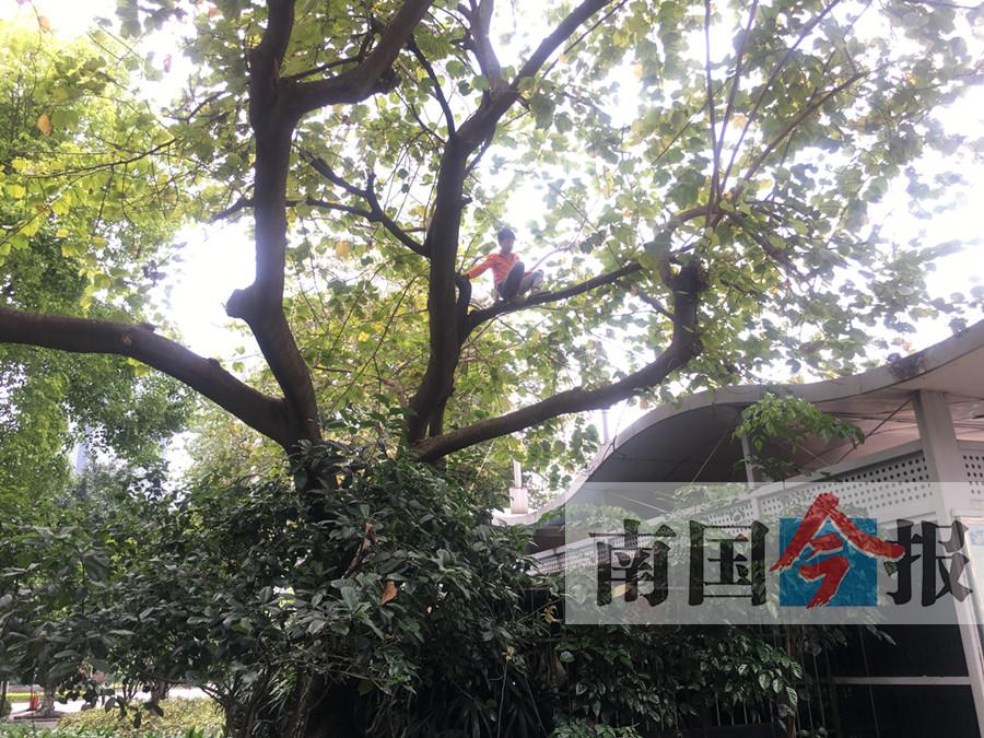 12岁少年七天三爬大树不下来 有什么想不开?(图)
