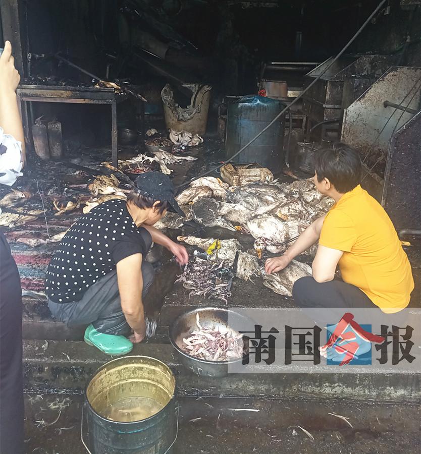 """柳州突发大火浓烟形成""""蘑菇云"""" 数千鸭子变""""烧鸭"""""""