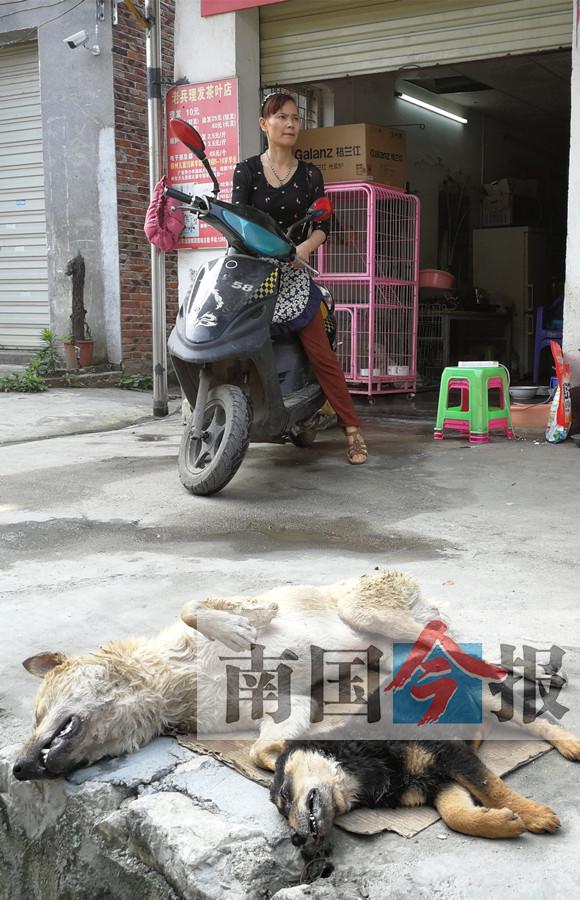 可疑摩托转几圈三只狗相继倒地 监控拍下事发过程