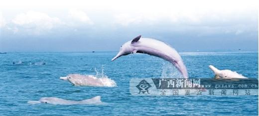 """""""钦""""近山海 """"南""""得精彩"""