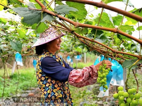 梧州市长洲区:乡村旅游扶贫路让群众受益(组图)