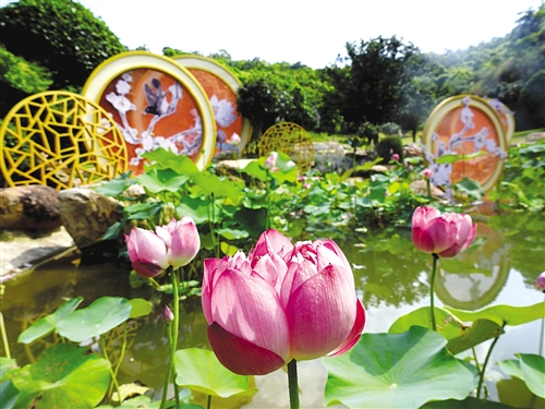 盛夏碧波间 青秀山风景区3万株水生花卉等你来赏