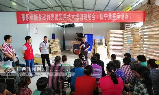 环江:探索桑蚕产业发展新模式 提升蚕茧质量和产量