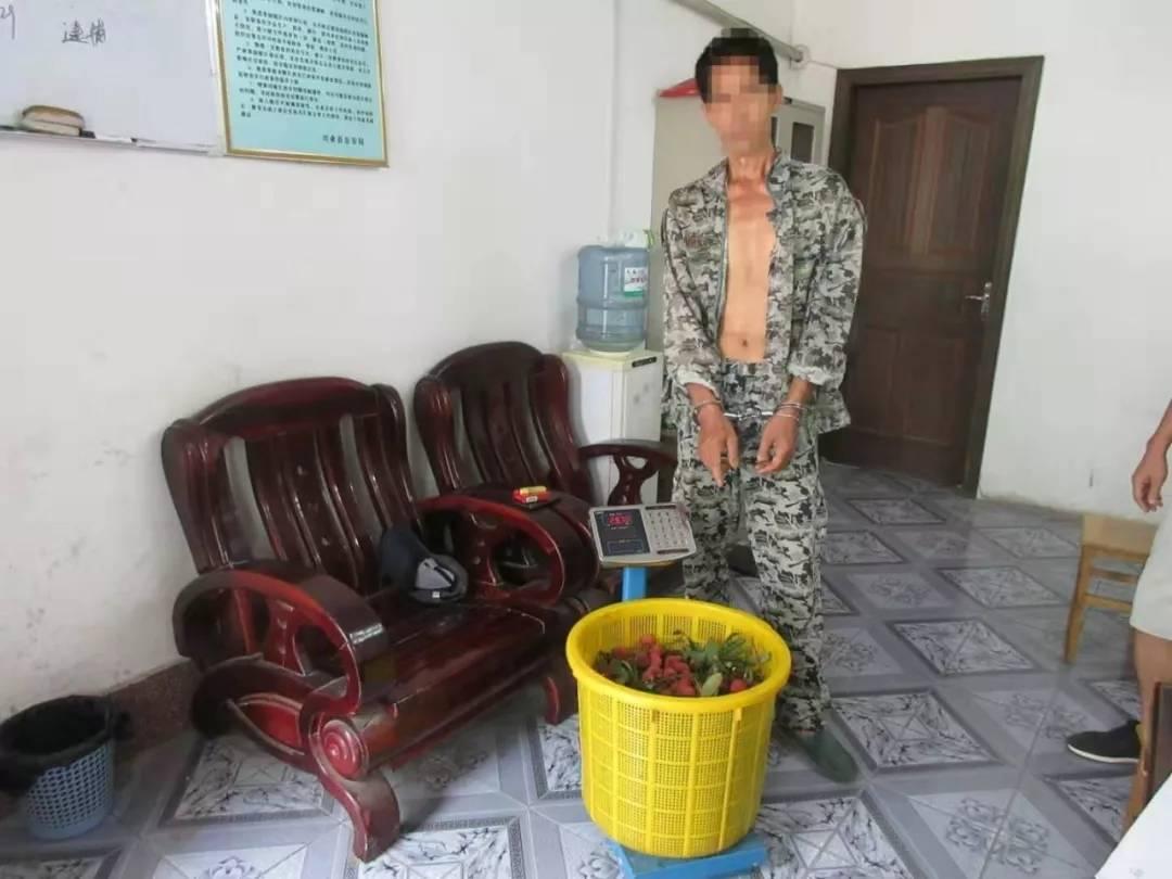 玉林两男子翻墙偷荔枝被抓住 理由让人哭笑不得!