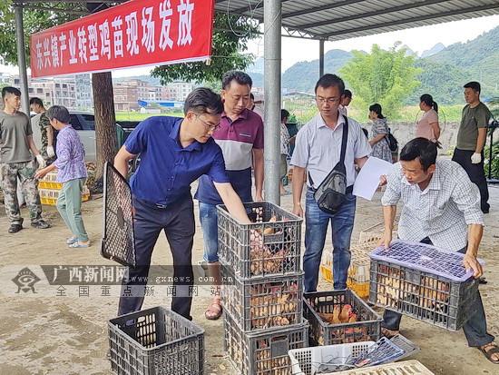 环江:发放脱瘟养殖种苗 助力贫困户进行产业转型