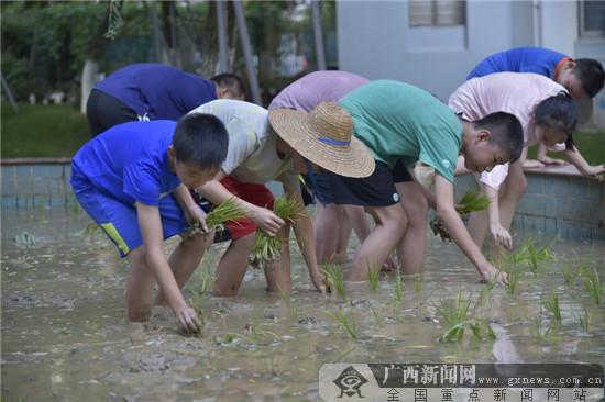 """南宁市滨湖路小学开展""""体验农耕文化""""活动"""