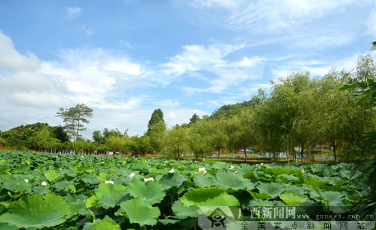 邕宁区:破旧立新 小何坡打造幸福宜居家园