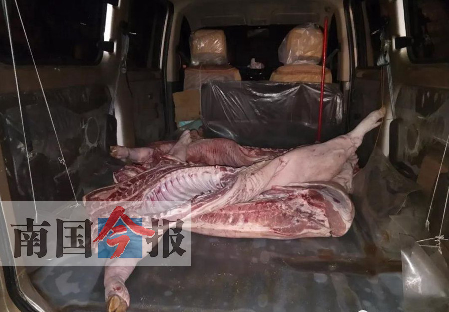 拿不出检疫合格证 男子所运猪肉被没收并销毁