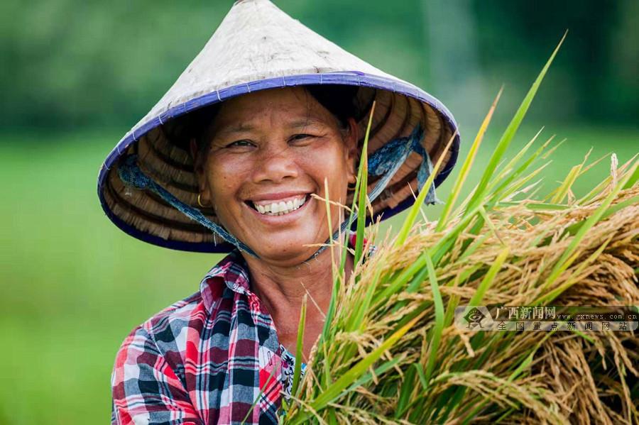"""北海千亩""""海水稻""""试种成功 可配套放养鱼虾蟹等"""