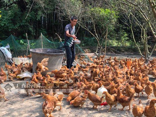 梧州长洲区:创新扶贫平台 拓宽贫困户农产品销路