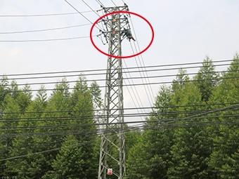 焦点:男子上高压电塔摘蜂窝被电流击穿