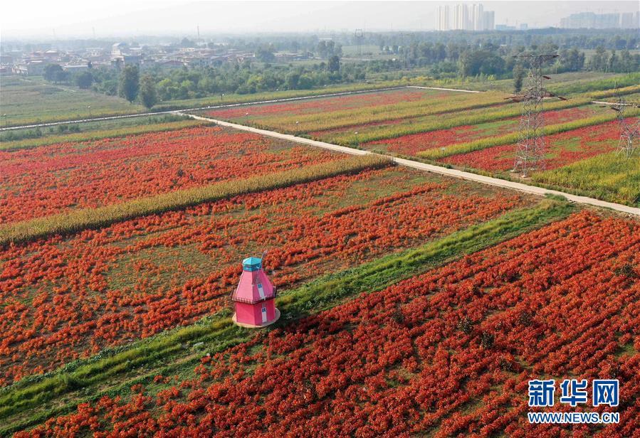 山西太原:花卉�a�I助增收