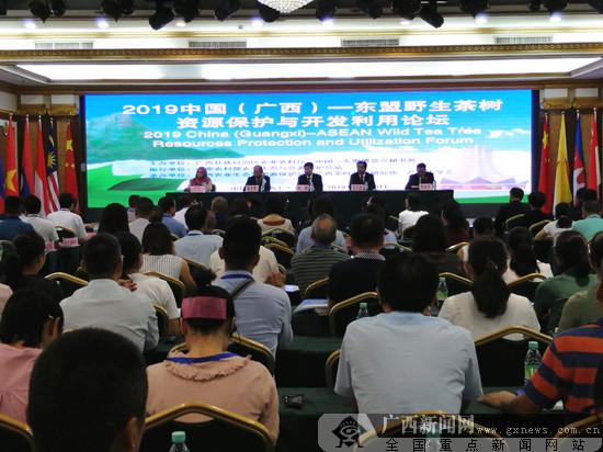 中国与东盟国家共同推动野生茶树资源保护与科学开发利用