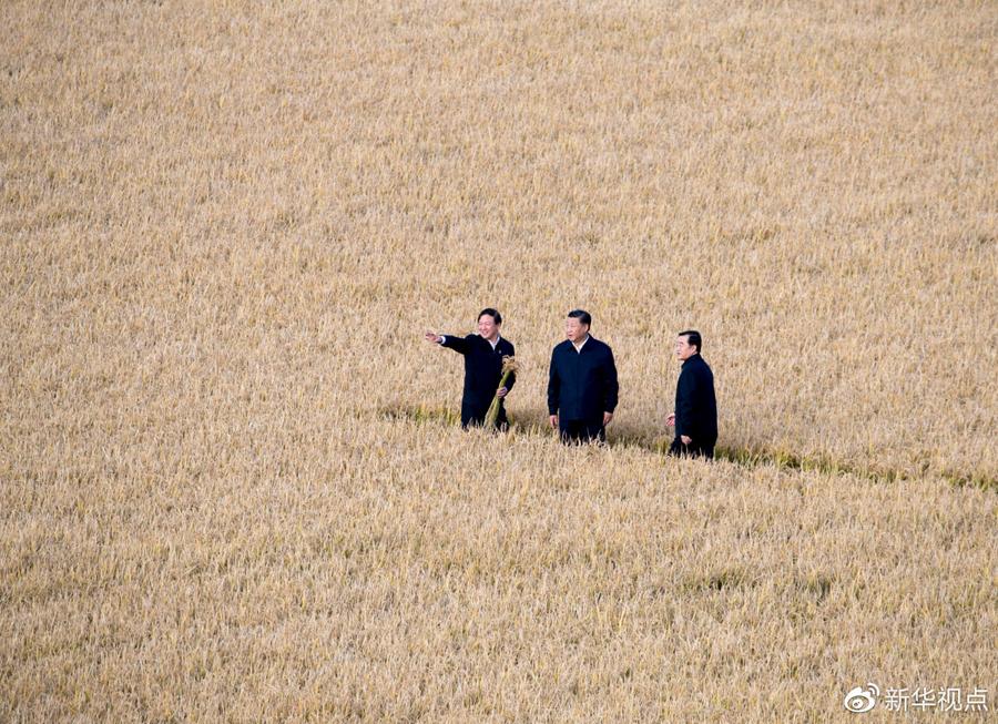 一把麦子一碗米,为何在总书记心里重千钧?