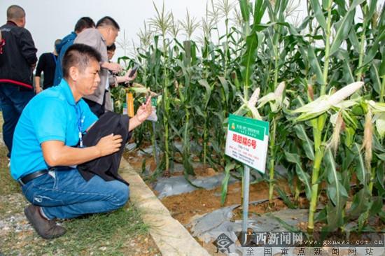 中国(南宁)鲜食玉米大会在南宁市西乡塘区举办
