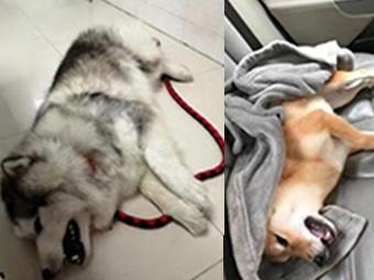 21日焦点图:十多条宠物狗在南宁一草地逗留后死亡