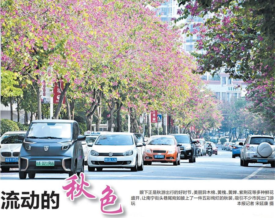 """南宁街头鲜花盛开成为市民赏秋""""网红""""打卡地(图)"""