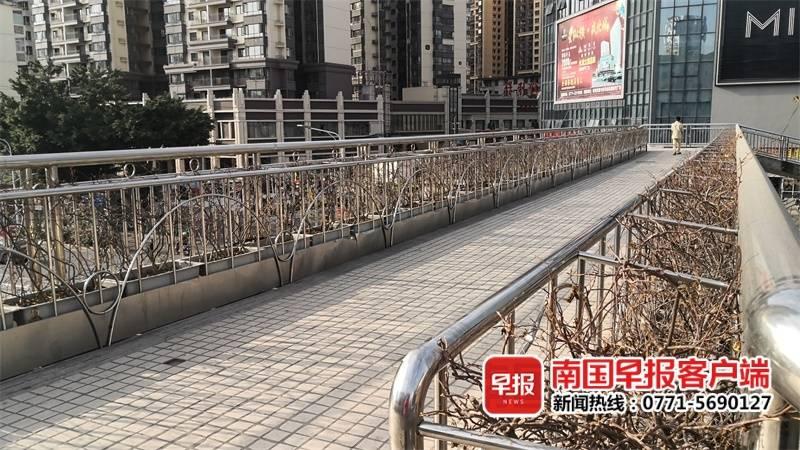 南宁多座天桥上的绿植大片枯萎 绿化部门回应