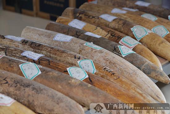 南宁海关移交1351件濒危动植物及其制品