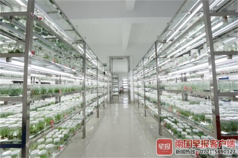 广西启用万种药用植物数据库 种类最多信息最全
