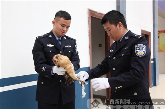 """受伤猫头鹰""""做客""""警营 民警救护助其重返大自然"""