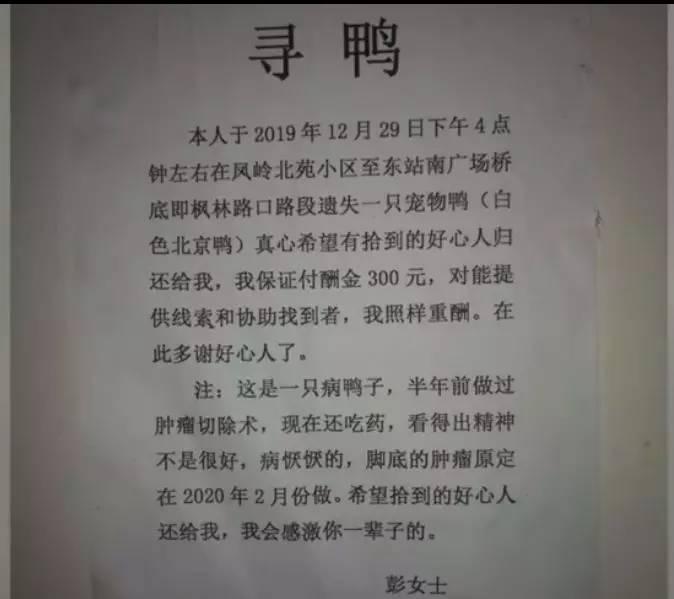 南宁一大姐登寻鸭启事: