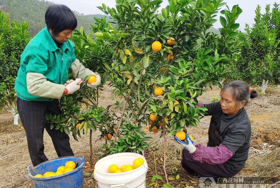 上思:夫妻共创家庭农场  生态种养助推脱贫