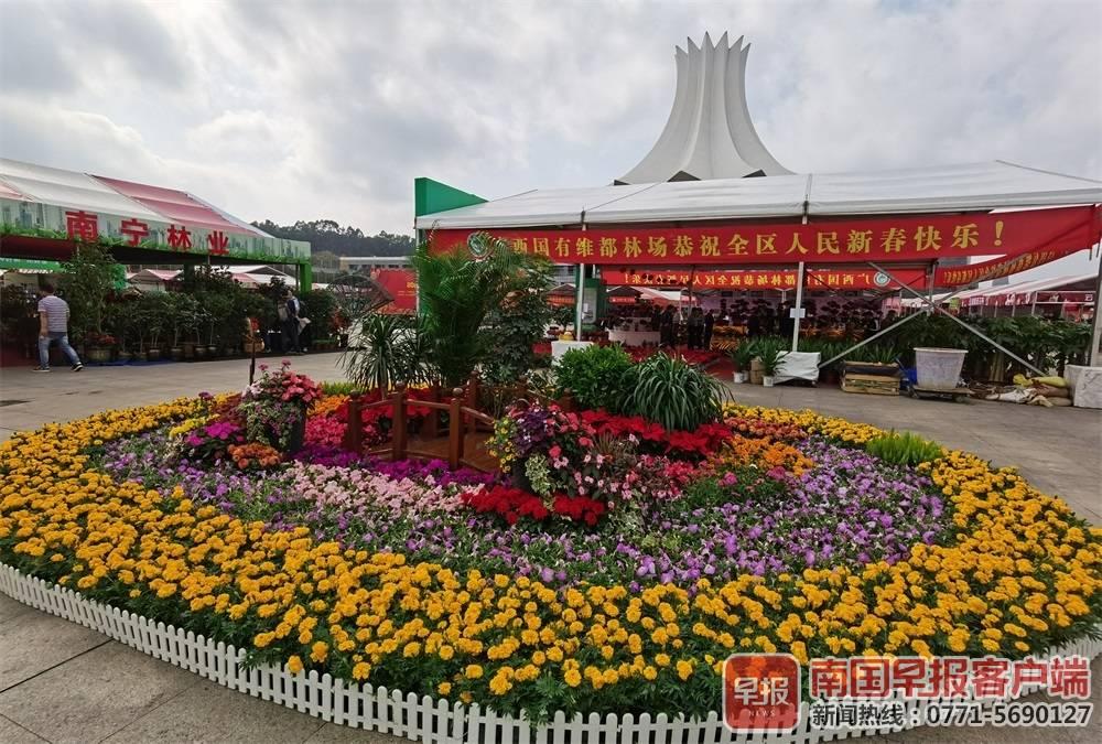 千种花卉!2020迎春花市在南宁国际会展中心举行沛县门户