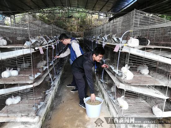 """灵山县村心村:喜领""""分红钱"""" 圆满""""过新年"""""""