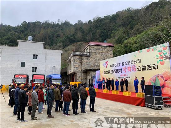 """中国石化助力20万斤""""爱心砂糖橘""""走出百色"""