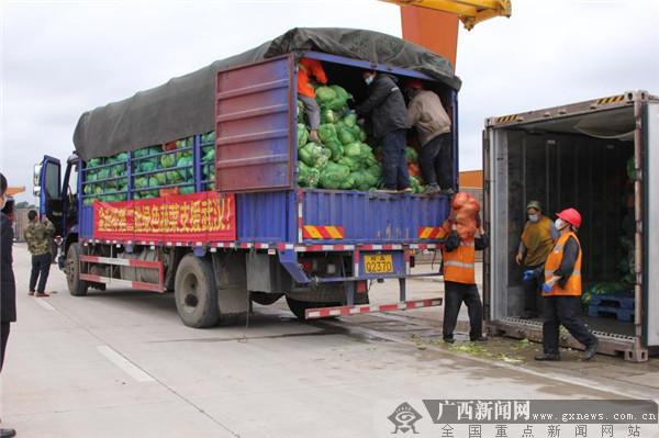 """南宁市农业农村局做好保障支援武汉""""菜篮子"""""""
