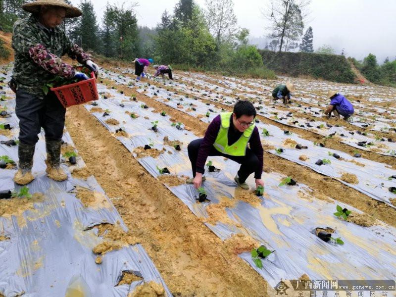 建行广西区分行助力扶贫村恢复春耕发展产业