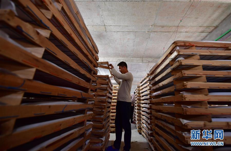 广西鹿寨:桑蚕养殖助脱贫